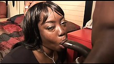 Fat ebony goes down on his pecker and titty fucks while sucking him