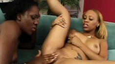 Juicy black bimbos get nice and sweaty while they bang each other